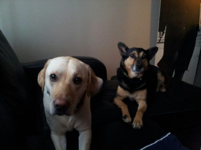 Blonde and her best friend, Zeus